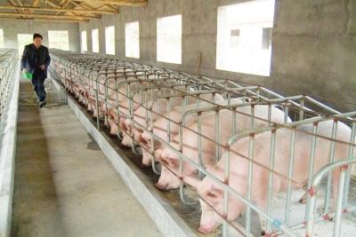猪肉价格下跌或可倒逼生猪养殖行业优化